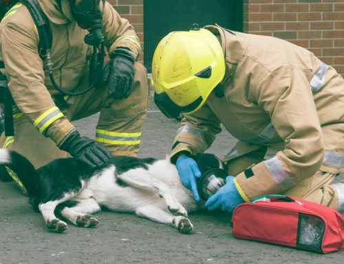 Dog and Owners Saved From Ayr House Fire